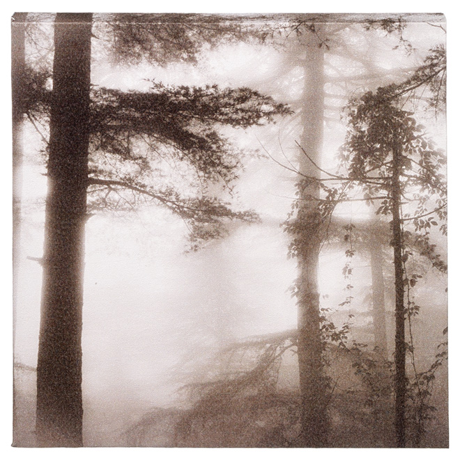 Cotton Black and White Canvas - Misty Forest
