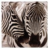 Cotton Black and White Canvas - Zebras