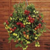 Cherry tomatoes basket
