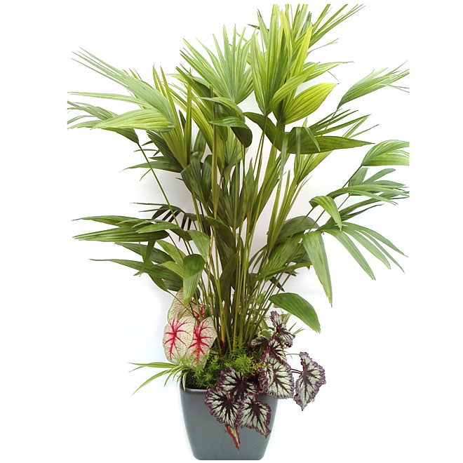 """Classic Opulence"" Tropical Arrangement"