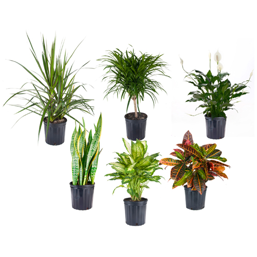 plantes tropicales assorties rona