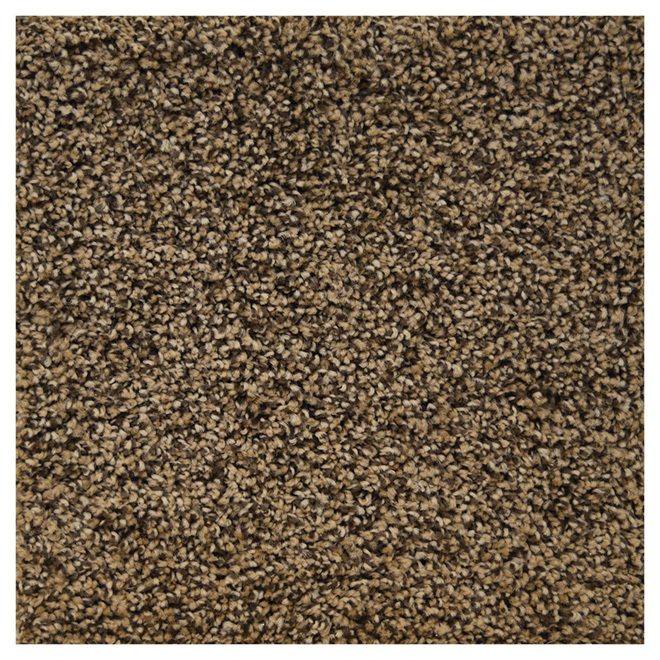 Cut Pile Textured Carpet - Root Coloured