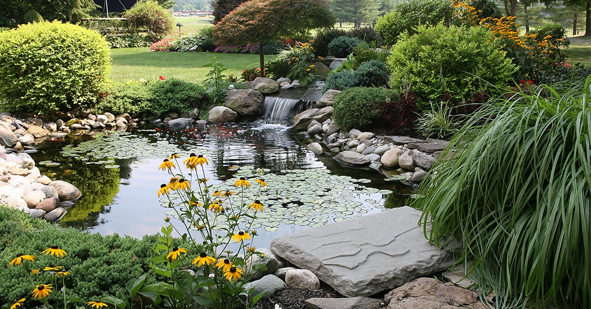 Laying out a water garden