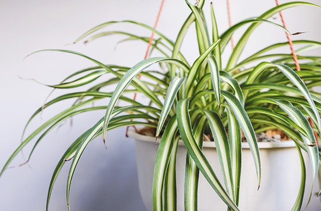 Keep Cats Away From Houseplant