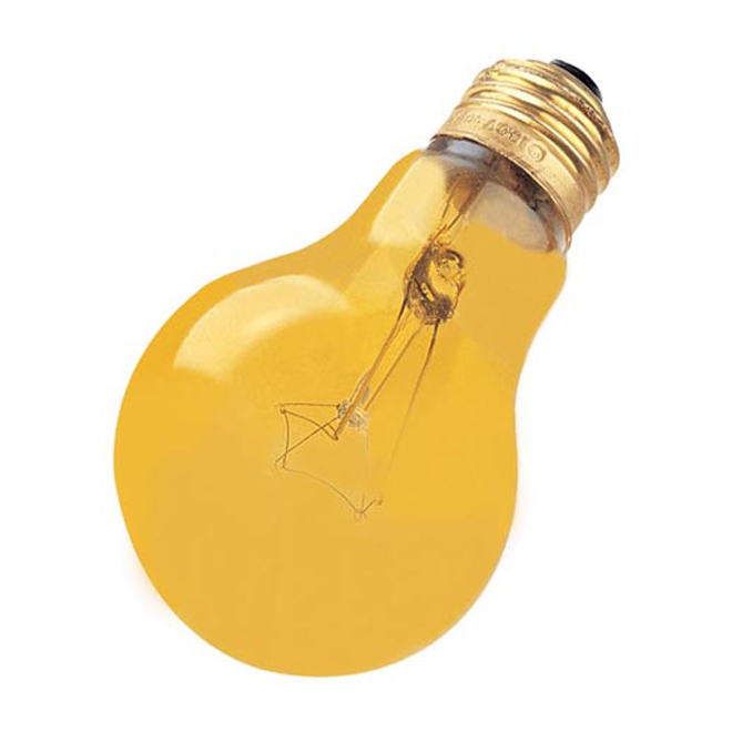 A19 Domestic Light Bulb