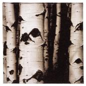 Cotton Black and White Canvas - Birch Bark