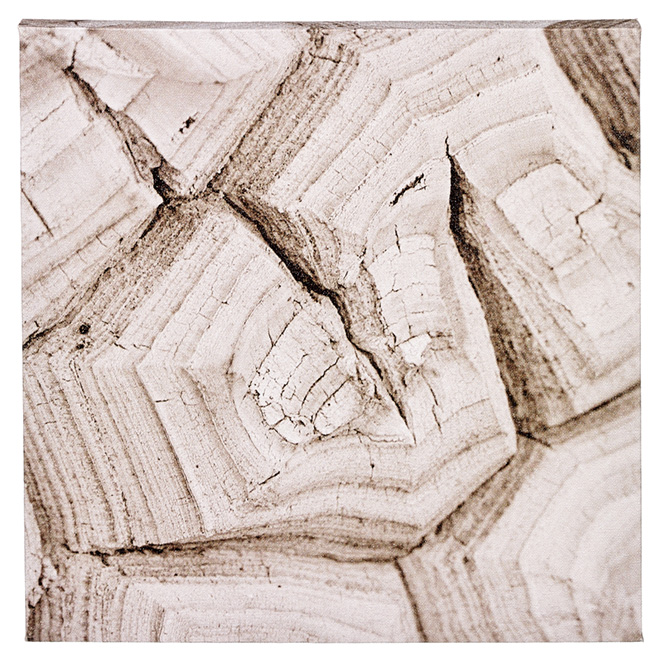 Cotton Black and White Canvas - Petrified Wood