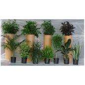 Plantes tropicales assorties