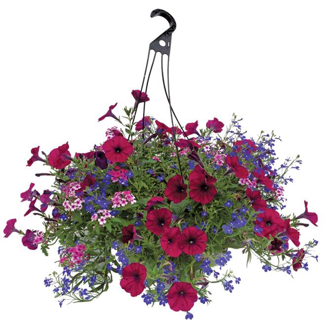 Rona Flower Baskets : Quot premium hanging basket rona
