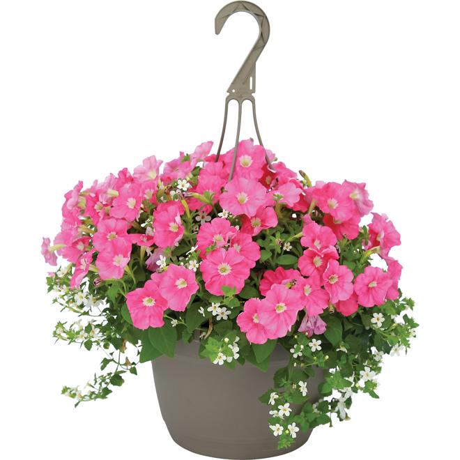 Rona Flower Baskets : Hanging flower basket rona