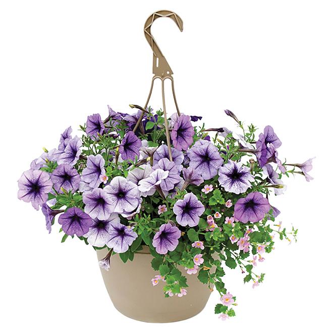 panier de fleurs suspendu rona