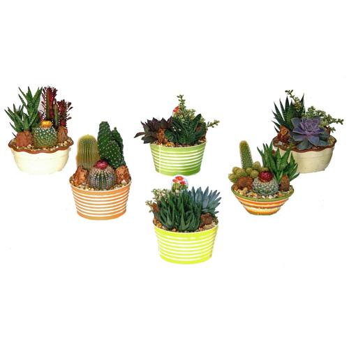 Cacti garden rona for Pot mural exterieur