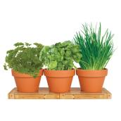 Indoor Kitchen Herb Trio Grow Kit - Bulbs