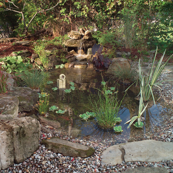 Water gardens support a diverse range of aquatic plants
