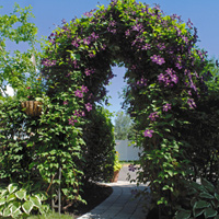 Plants adorning an archway