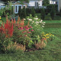 Contrasting colours bring vibrancy to a flowerbed