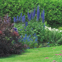 Landscaping using plants of various sizes