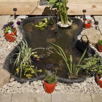 plante aquatique rona