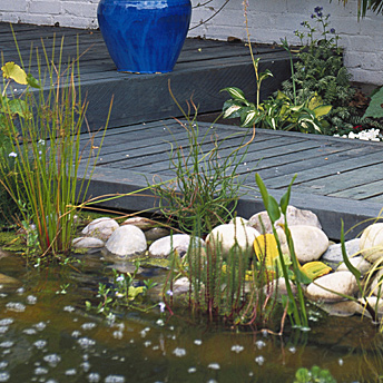 Aquatic plants complete this water garden